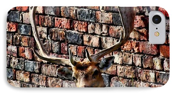 Against The Wall Phone Case by Isabella F Abbie Shores FRSA