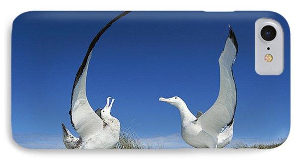 Antipodean Albatross Diomedea Phone Case by Tui De Roy
