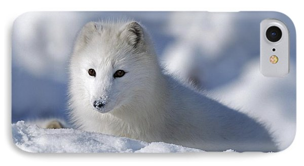 Arctic Fox Exploring Fresh Snow Alaska Phone Case by David Ponton