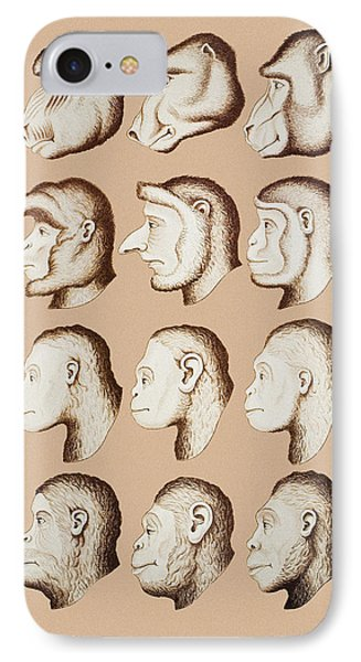 Artwork Of Twelve Catarrhines, 1870 IPhone Case by Mehau Kulyk