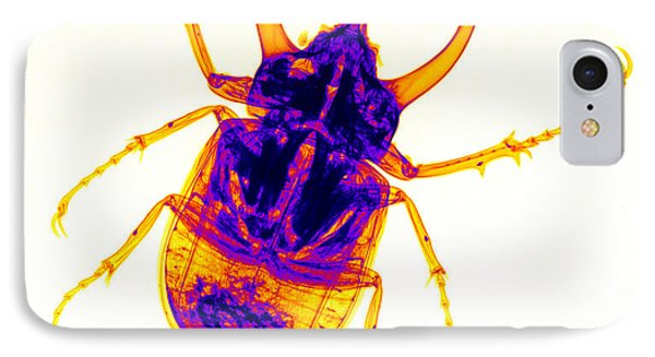 Atlas Beetle X-ray Phone Case by Ted Kinsman