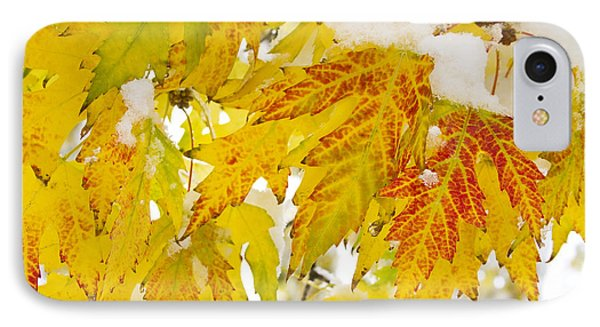Autumn Snow  Phone Case by James BO  Insogna
