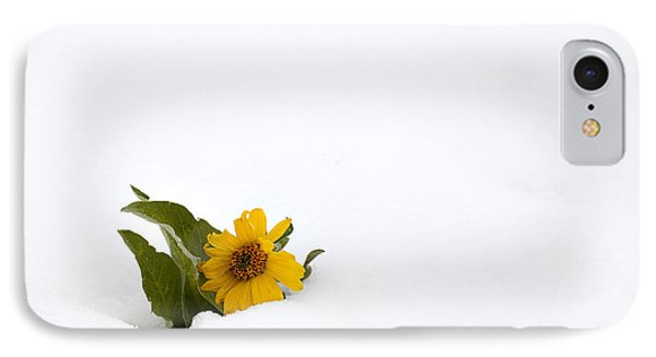 Balsamroot In Snow Phone Case by Hal Horwitz and Photo Researchers