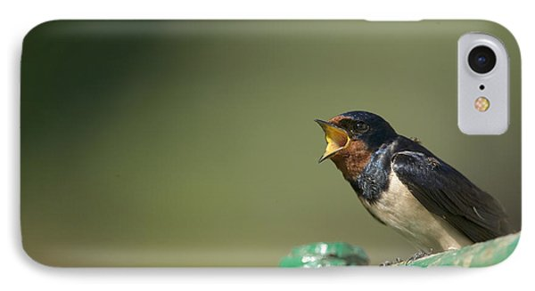 Barn Swallow Hirundo Rustica Fledgling Phone Case by Cyril Ruoso