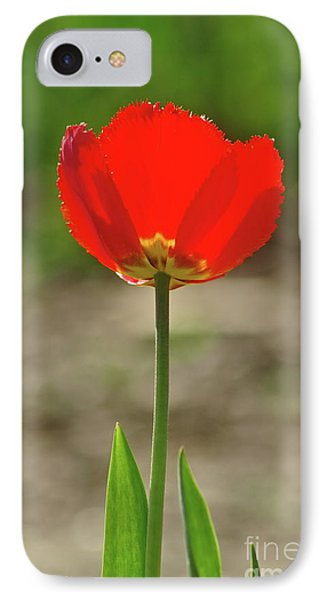 IPhone Case featuring the photograph Beauty In Red by Dariusz Gudowicz