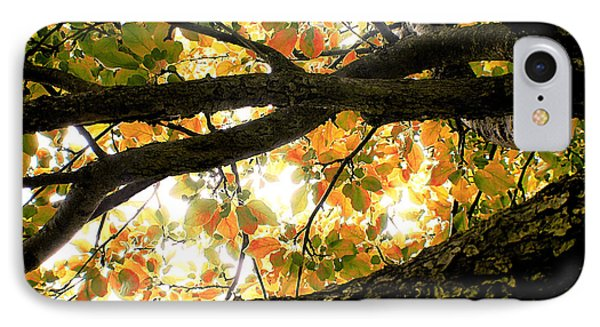 Beneath The Autumn Wolf River Apple Tree IPhone Case by Angie Rea