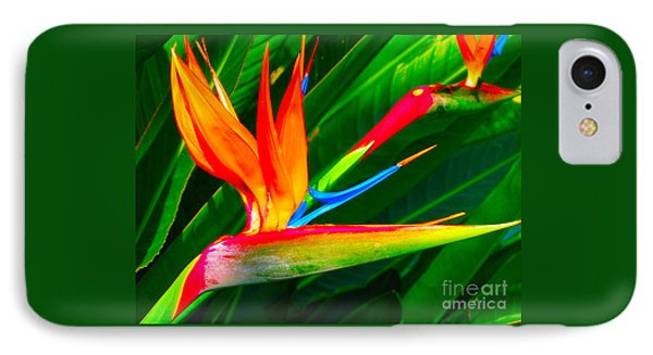 Bird Of Paradise IPhone Case by Eva Kaufman