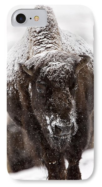 Bison Buffalo Wyoming Yellowstone Phone Case by Mark Duffy