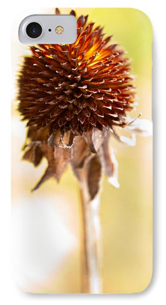 Black-eyed Susan After The Winter IPhone Case by  Onyonet  Photo Studios