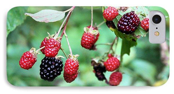 Blackberries Phone Case by Kristin Elmquist