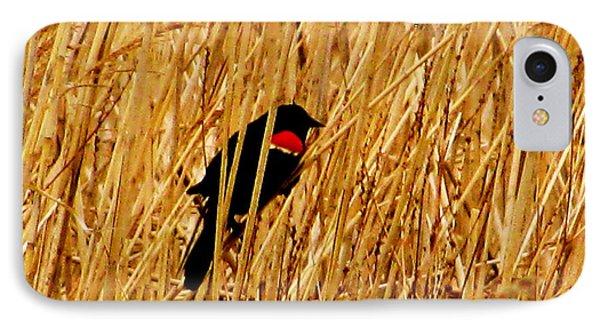 Blackbird In The Reeds IPhone Case