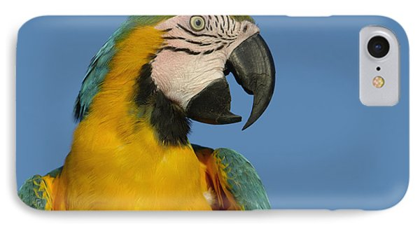Blue And Yellow Macaw Ara Ararauna Phone Case by Pete Oxford