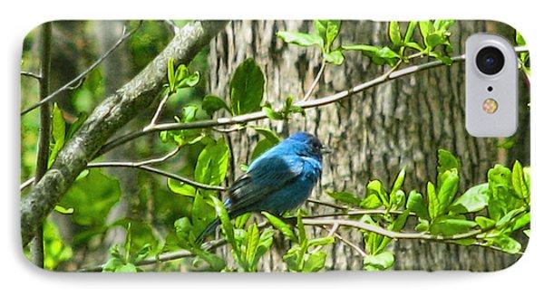 Blue Bird Of Happiness  Phone Case by Debra     Vatalaro