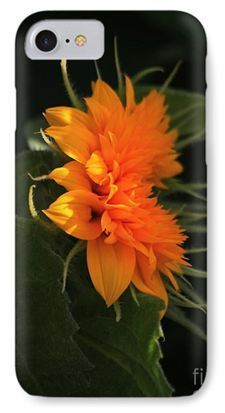 Bright Orange Teddybear Sunflower IPhone Case by Marjorie Imbeau