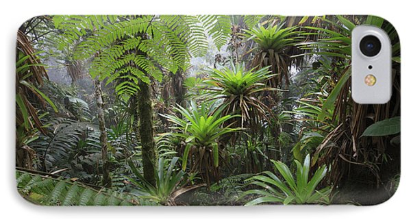 Bromeliad Bromeliaceae And Tree Fern Phone Case by Cyril Ruoso