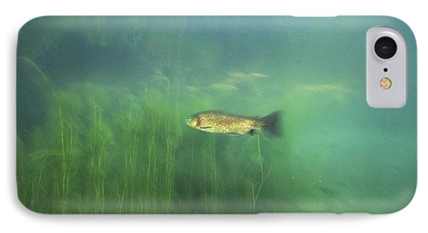 Brown Trout Phone Case by Alexis Rosenfeld