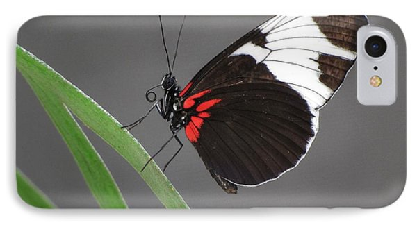 IPhone Case featuring the photograph Butterfly  by Tam Ryan
