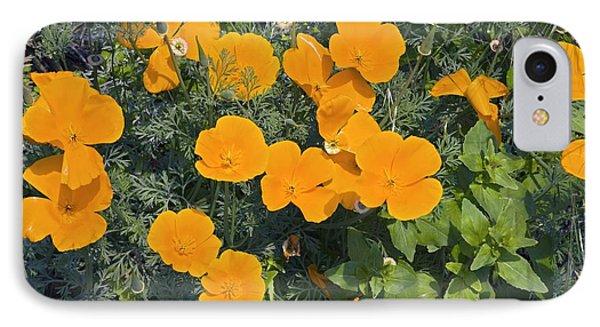 Californian Poppy (eschscholzia Sp.) Phone Case by Dr Keith Wheeler
