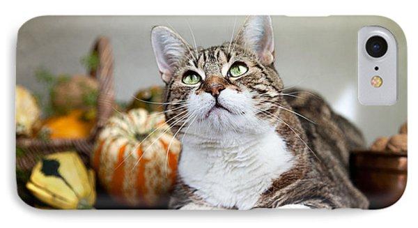 Cat And Pumpkins IPhone Case
