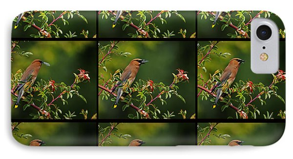 Cedar Wax Wing Having Lunch IPhone Case by Jim Boardman