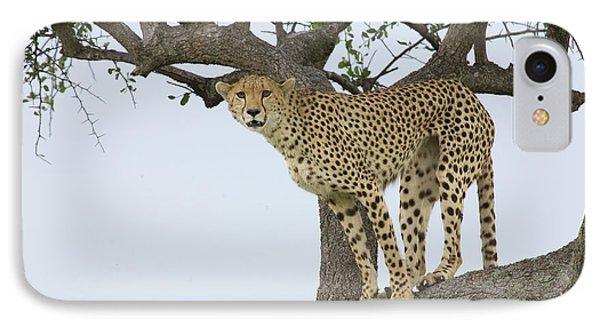 Cheetah Acinonyx Jubatus Female Phone Case by Suzi Eszterhas