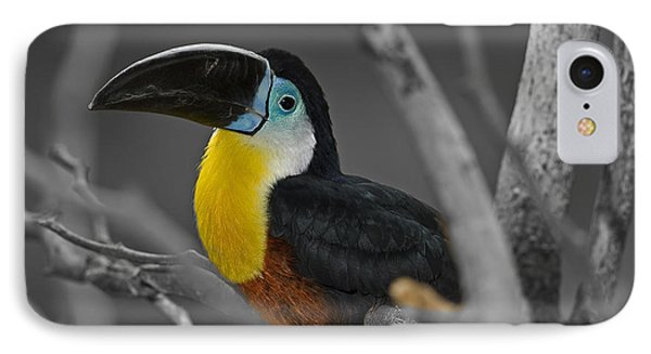 Chestnut Mandibled Toucan  IPhone Case by JT Lewis