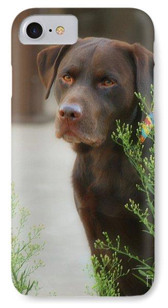 Chocolate Labrador - Womans Best Friend Phone Case by Donna Greene