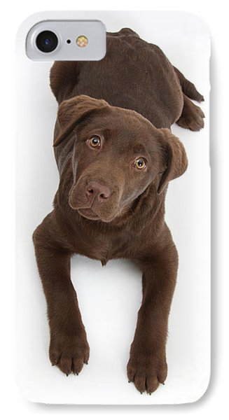 Chocolate Labrador Pup IPhone Case by Mark Taylor