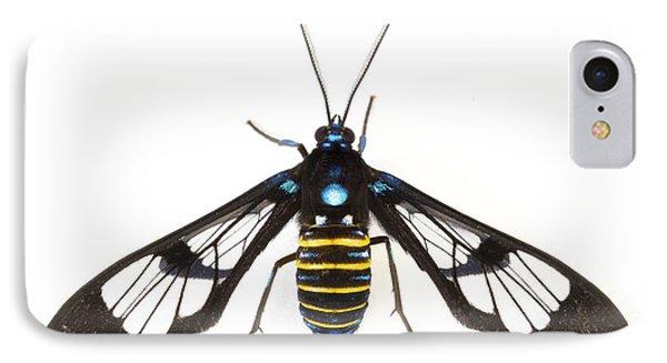 Clearwinged Tiger Moth Tapanti Np Costa Phone Case by Piotr Naskrecki