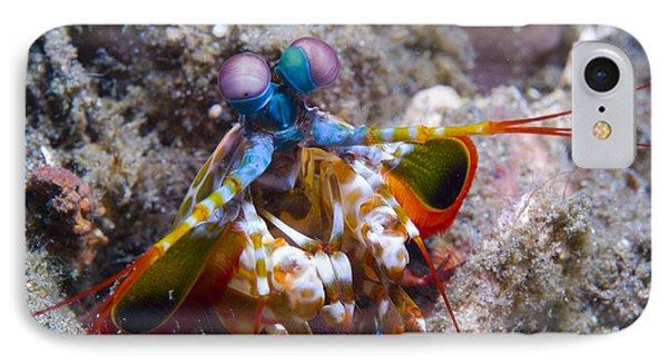 Close-up View Of A Mantis Shrimp, Papua Phone Case by Steve Jones