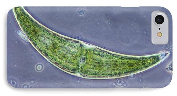 Closterium Sp. Algae Lm Phone Case by M. I. Walker
