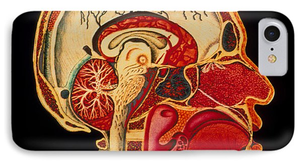 Coloured Illustration Of Sectioned Brain In Head Phone Case by Mehau Kulyk