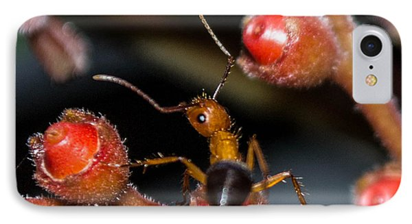Curious Ant IPhone Case by Shannon Harrington