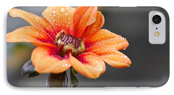 Dahlia In The Mist Phone Case by Sean Griffin