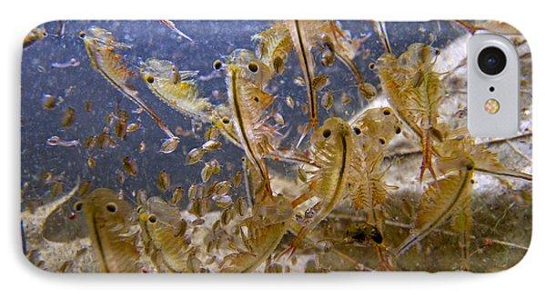 Eastern Fairy Shrimp Easterbrook Forest Phone Case by Piotr Naskrecki