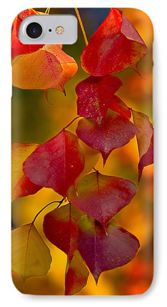 IPhone Case featuring the photograph Fall Color 1 by Dan Wells