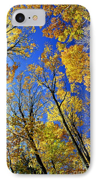 Fall Maple Trees Phone Case by Elena Elisseeva