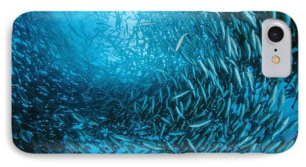 Farmed Sea Bass Phone Case by Alexis Rosenfeld
