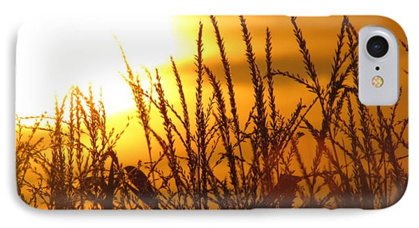 Farming Sunset IPhone Case by France Laliberte