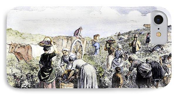 France: Grape Harvest, 1854 Phone Case by Granger