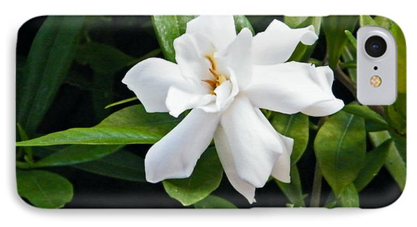 IPhone Case featuring the photograph Gardenia by Brian Wright