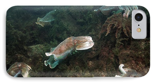 Giant Cuttlefish IPhone Case