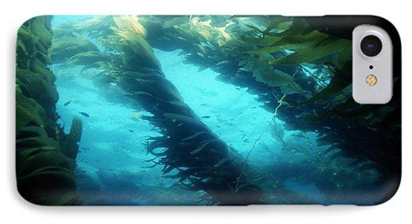 Giant Kelp Phone Case by Georgette Douwma