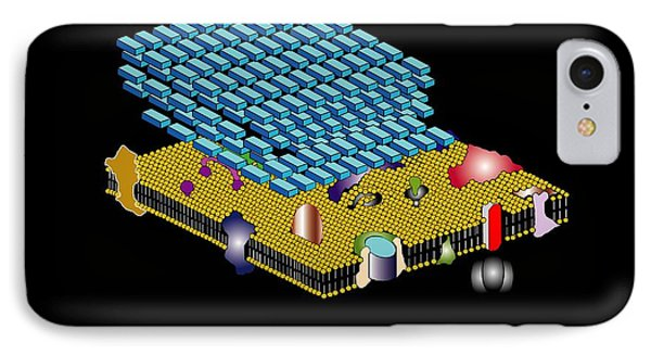 Gram Positive Cell Wall, Artwork Phone Case by Francis Leroy, Biocosmos