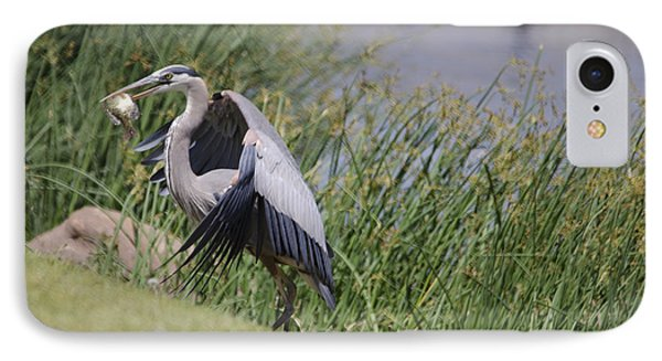 Great Blue Heron Phone Case by Donna Greene