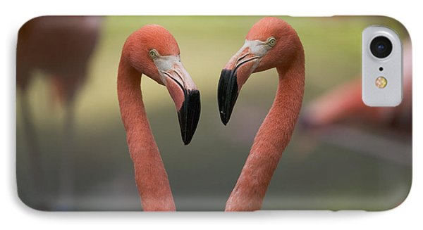 Greater Flamingo Phoenicopterus Ruber IPhone Case by Cyril Ruoso