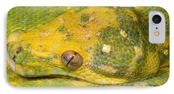 Green Tree Python IPhone Case by Dante Fenolio