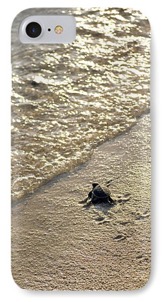 Green Turtle Hatchling IPhone Case by Matthew Oldfield