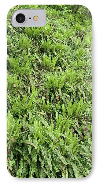 Hart's Tongue Fern Phone Case by Adrian Bicker