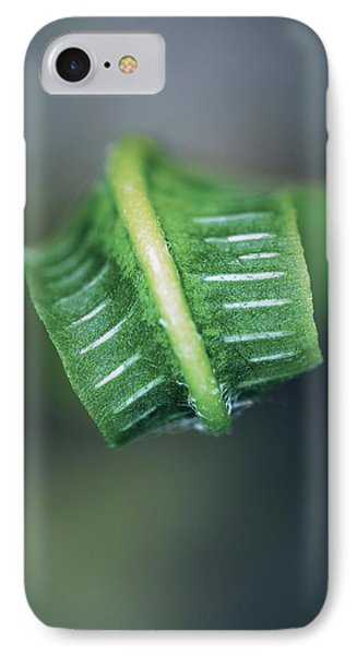 Hart's Tongue Fern Unfurling Phone Case by Colin Varndell